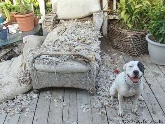 Dog and couch