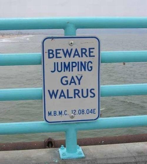 Gay walrus