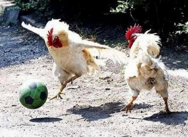 Soccer chicks