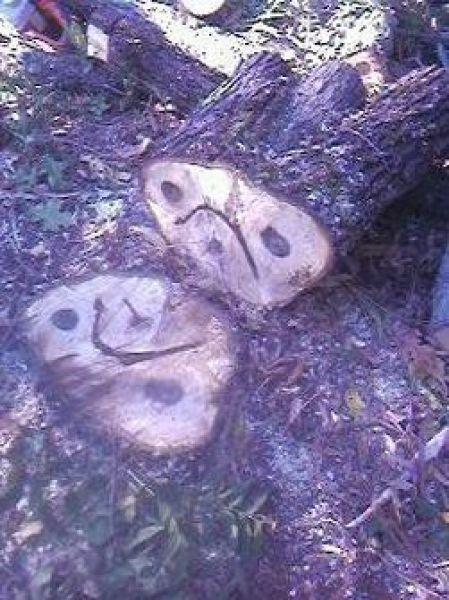 Sad stump