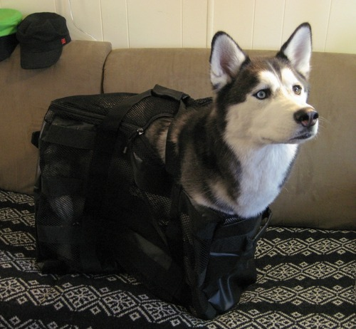 Dog carry-on