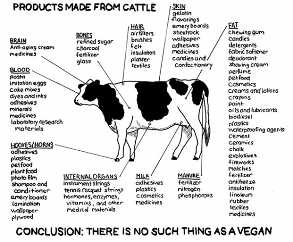 Products_made_from_cattle