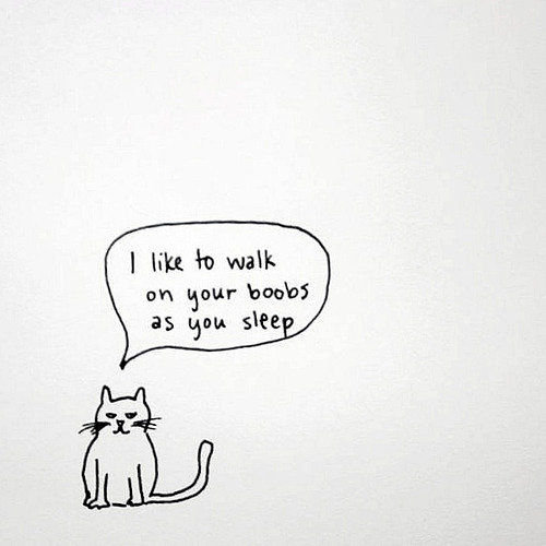 Kitty note