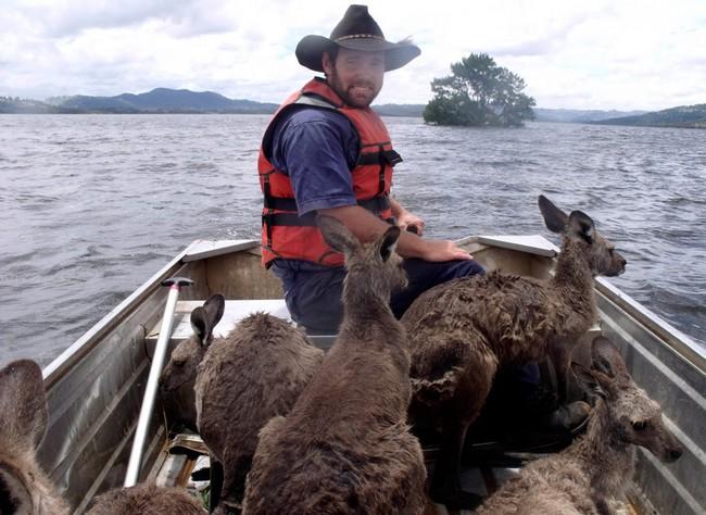 Boatful of kangaroos