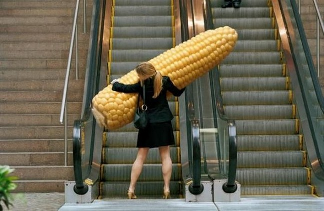 http://bitsandpieces.us/wp-content/uploads/2011/01/imagescorn-cob-giant_small.jpg