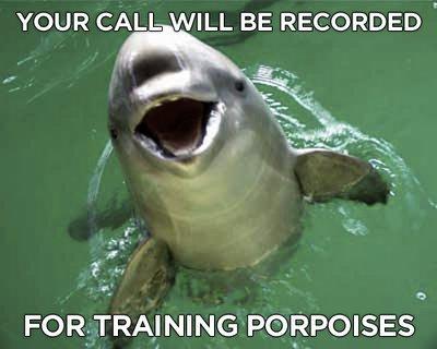 Training porpoises