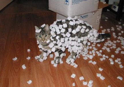 Static cat