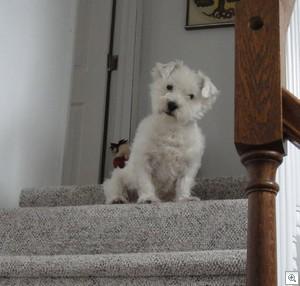 Gus on steps