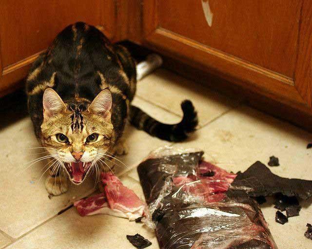 Its my steak now