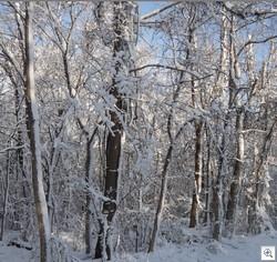 Mar snow8