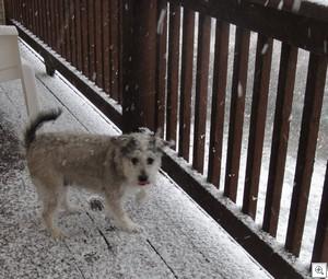 Trixie porch