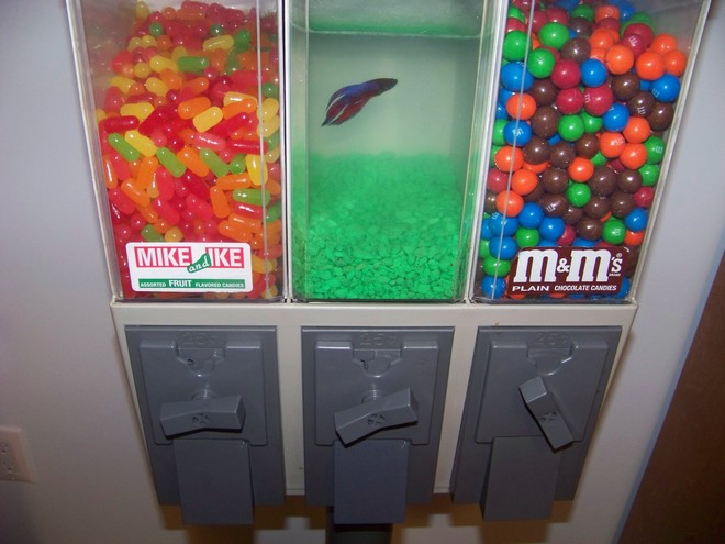 Sweets for the wtf bits and pieces for Gumball machine fish tank