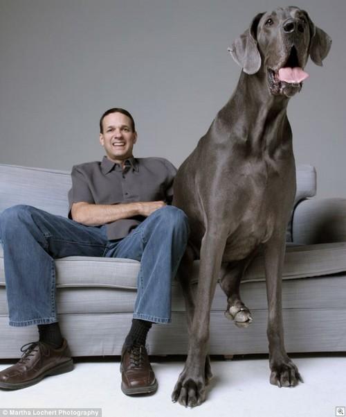 George dog1