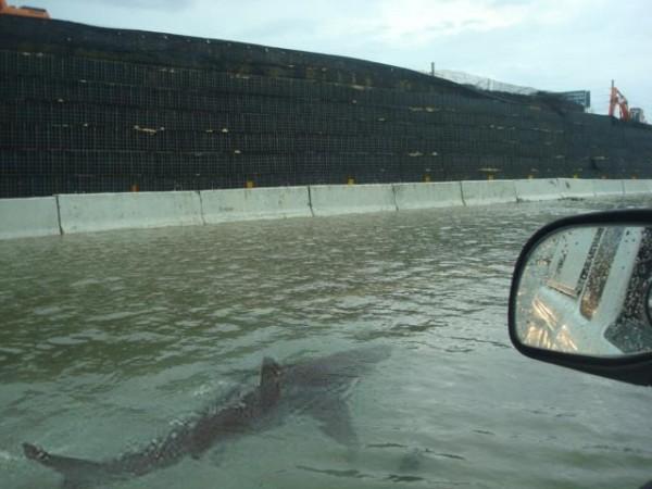 Hurricane shark