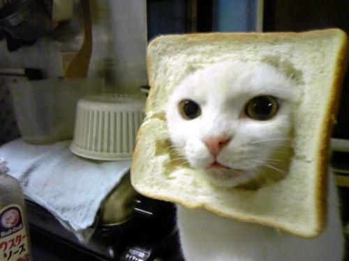 Inbread cat