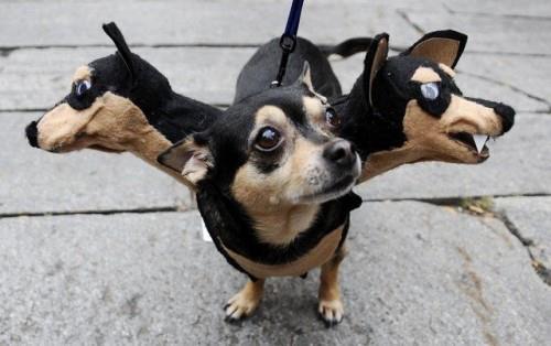 3 headed dog