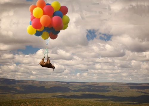 http://bitsandpieces.us/wp-content/uploads/2011/11/imagesballoon-cow.jpg