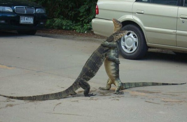 Gator hug