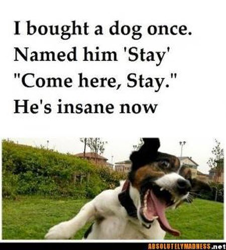 Dog named stay