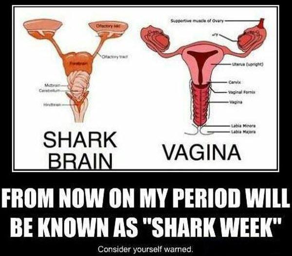 Shark week2