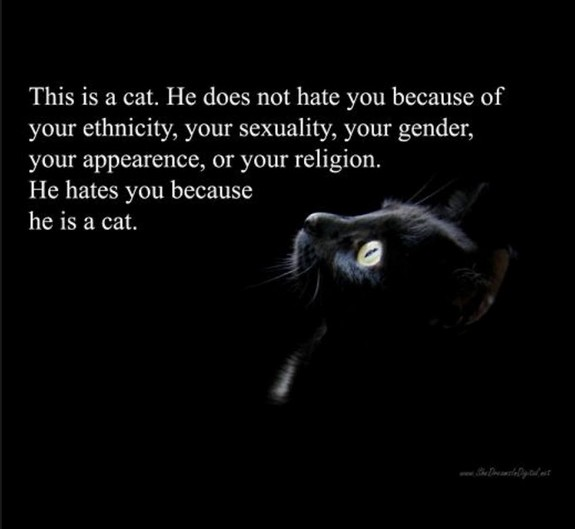 Why the cat hates you