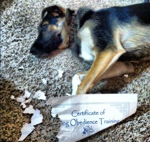 Dog obedience irony