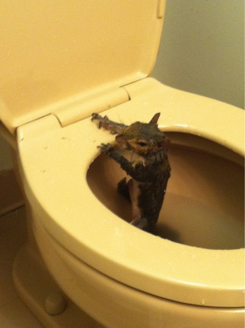 Cat Falling Into Toilet Gif