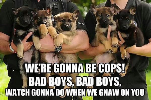 Dog cops