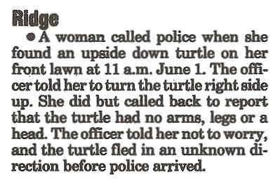 Turtle flad