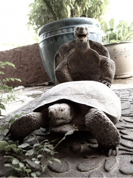 Tortoises also know how to have fun
