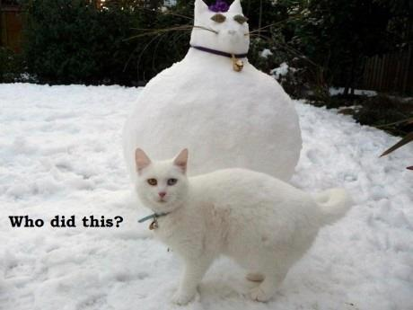 Fat cat snowcat