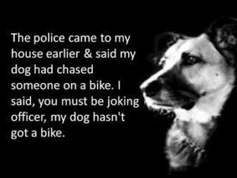 My dogs bike