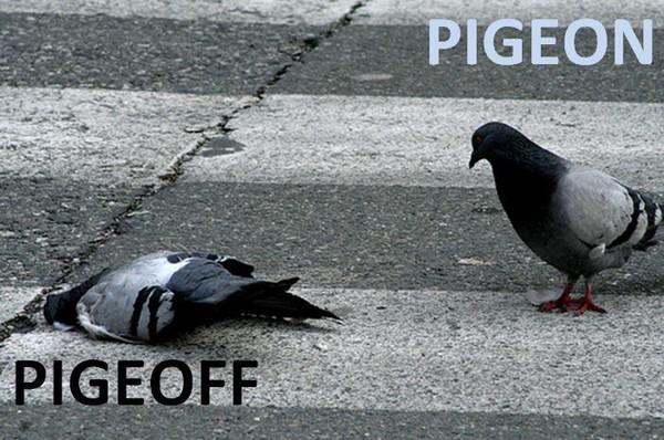 Pigeon status