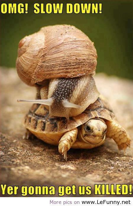Omg slow down