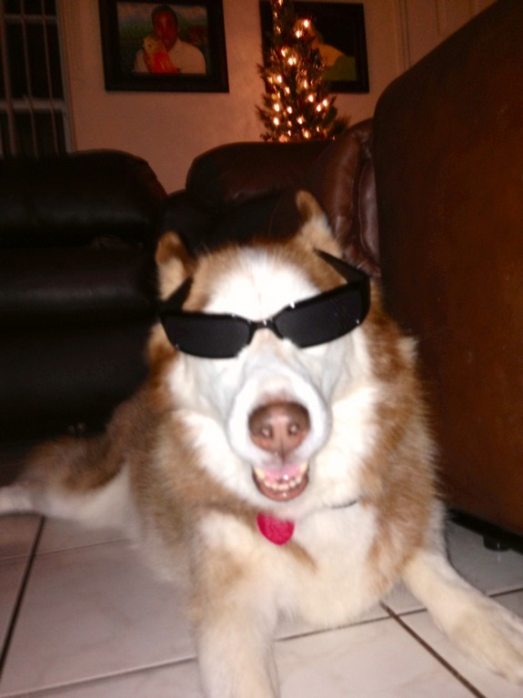 Cool cat err dog