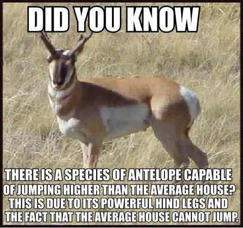 Did you know antelope