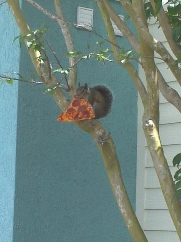 Squirrel pizza