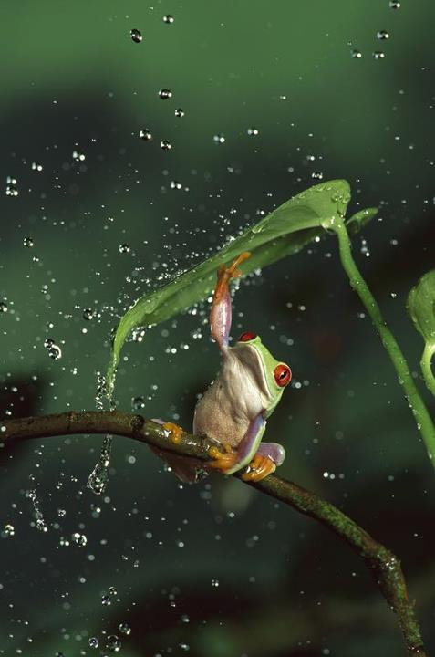 Frog taking cover