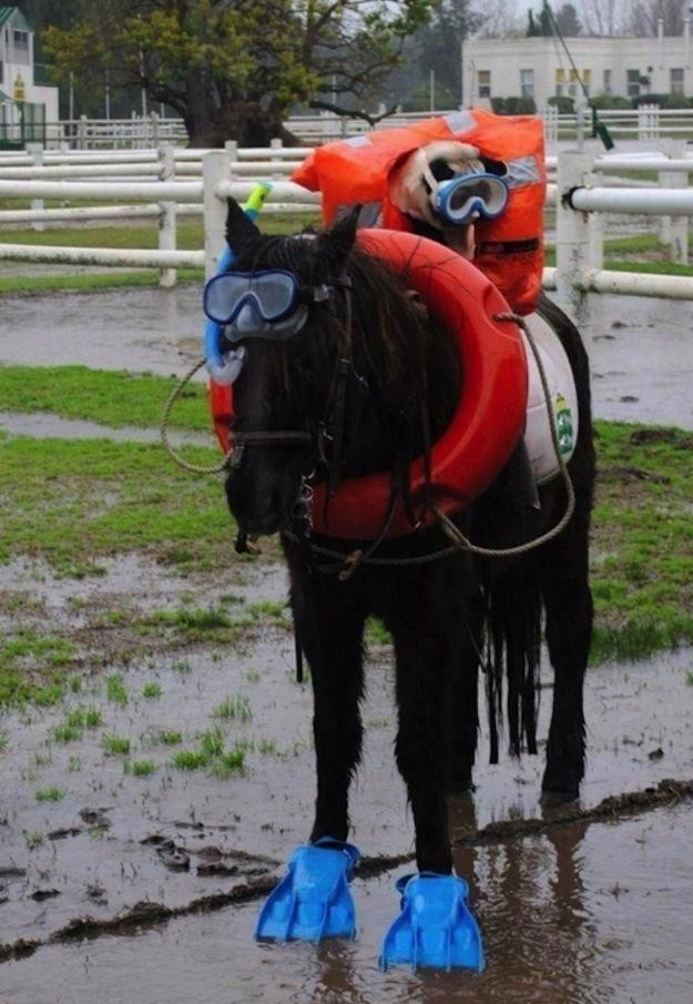Mergulho cavalo