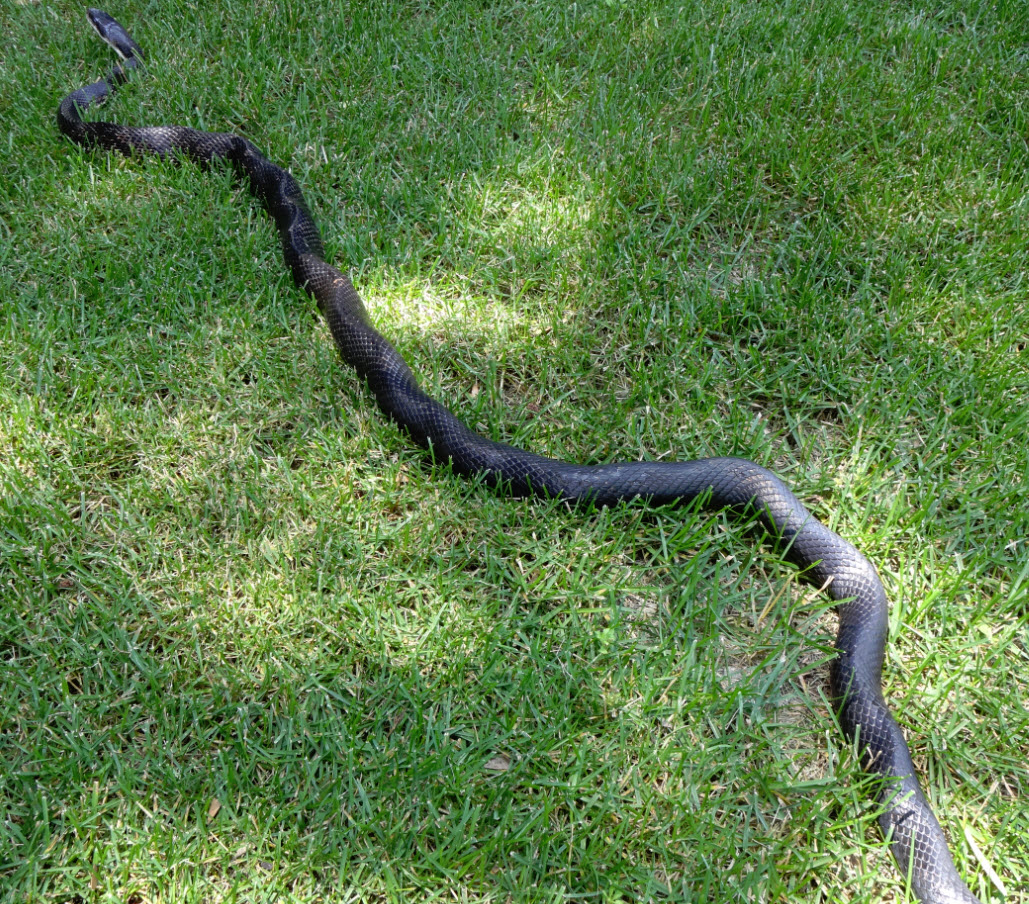 Slithering in my yard - Bits and Pieces