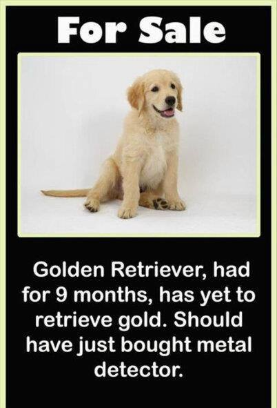 Golden retriever hasn't retrieved