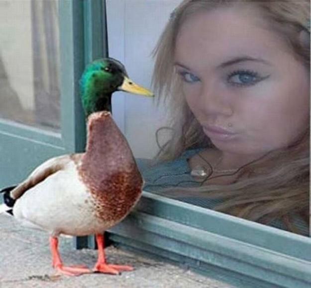 Duck faces_The final combat