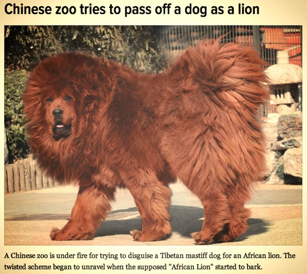 Chines try to pass dog off as lion