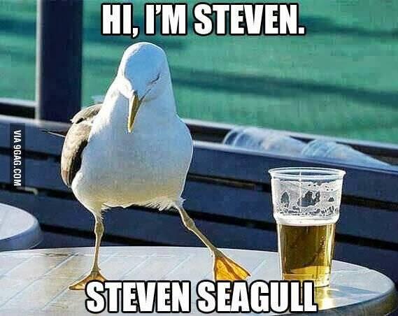 Hi, I'm Steven