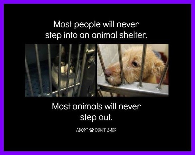 Most people won't go into an animal shelter