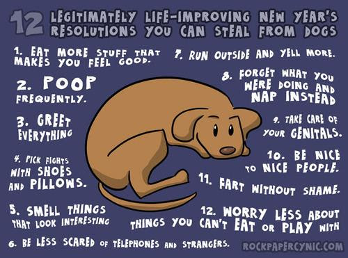 Ny resolutions from your dog