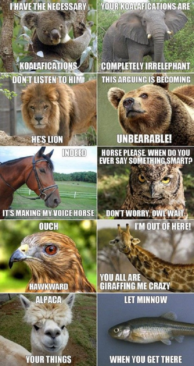 Punny animals
