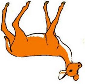 Deer flipped