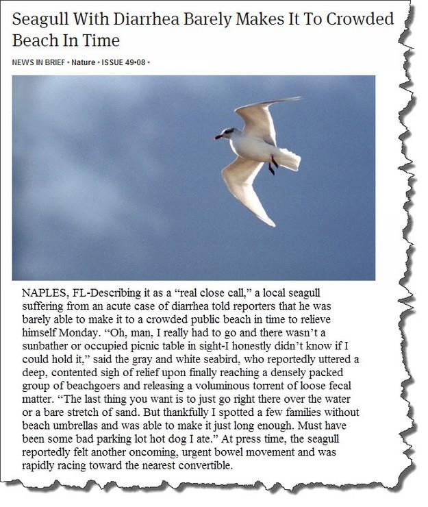 Seagull with dirarrhea