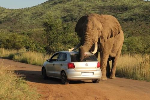 An elephant in love_3